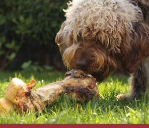 Tipos de comida para perros