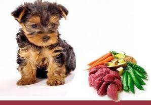Alimentación Equilibrada para Perros